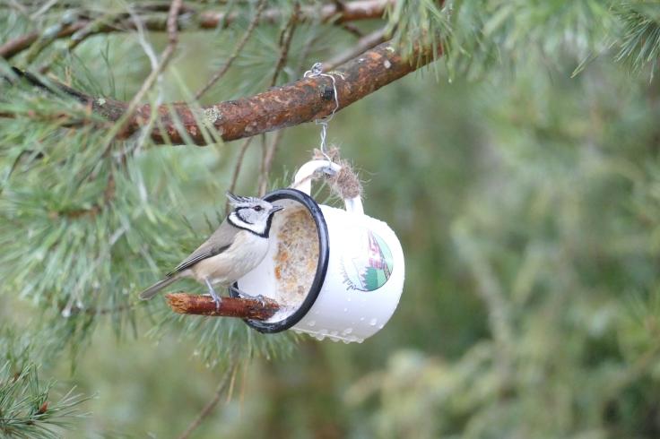 ako si vyrobiť lojovú zmes pre vtáky